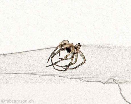 La Pieuvre, 20x30cm